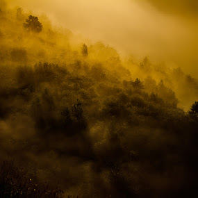 light of begining by Nicu Hoandra - Landscapes Mountains & Hills ( colour, hill, tree, fog, sunshine )