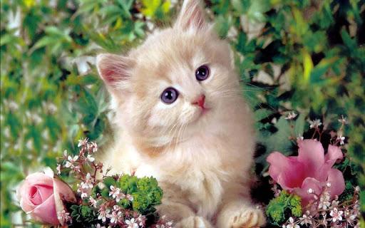可爱会说话的猫