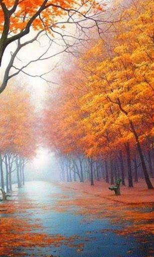 【免費攝影App】Sunny Forest Live Wallpaper-APP點子