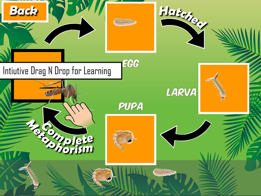 玩教育App|动物生命周期 – 昆虫 Insects Life Cycle免費|APP試玩