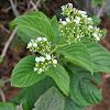 Flower/Bush
