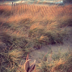 Autumn beach. by Laura Ofeno - Instagram & Mobile iPhone