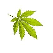 Send Marijuana