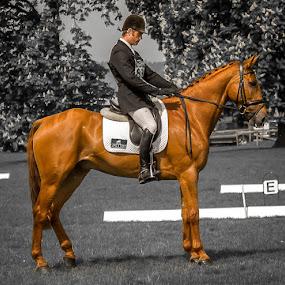 Rockingham horse trails by Steve Trigger - Animals Horses