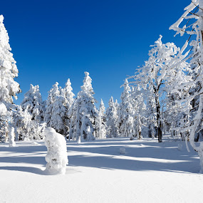 Winter wonderland by Tomas Vocelka - Landscapes Forests ( krušné hory, ore mountains, krusne hory, blue sky, winter, white, trees, frozen, landscape )