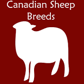 Canadian Sheep Breeds