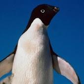 iSlider Penguin Slide Puzzles