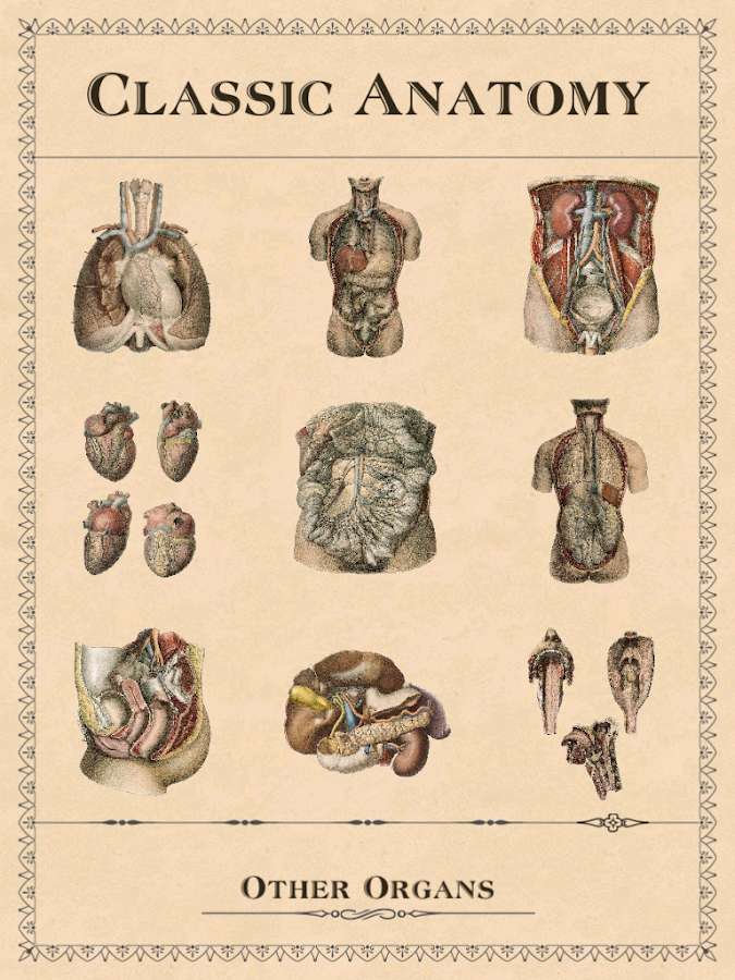 Classic Anatomy - screenshot