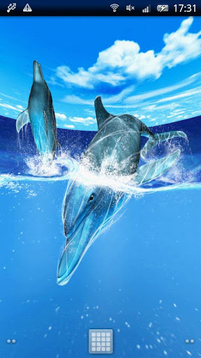 Play of Dolphins