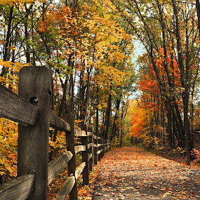 A Country Way by Corinne Noon - Landscapes Forests ( nature, autumn, path, forest, landscape )