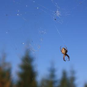 Swirls by Elena Jipa - Nature Up Close Hives & Nests
