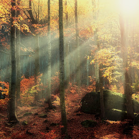SCENT OF AUTUMN by Paolo Lazzarotti - Landscapes Forests ( mountain, autumn, red leaves, moss, ray of light, forest, stones, appennines, mist,  )
