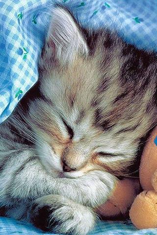 Sleeping Cat Wallpapers
