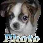 图狗 icon