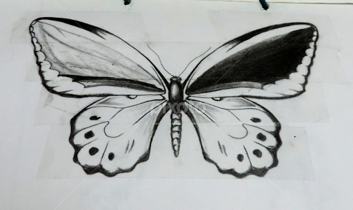 Pencil Sketches Of Butterflies Flying