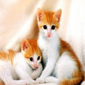 صور قطط جميله