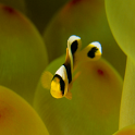خلفية حوض الأسماك icon