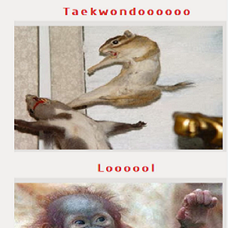 funniest pictures ever
