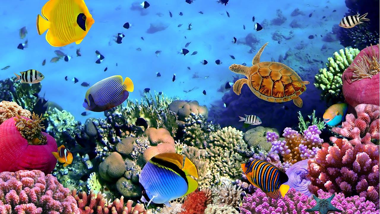Ocean fish live wallpaper android apps on google play for Live fish online