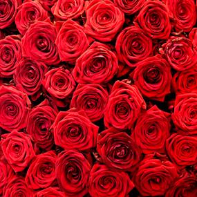 Red roses by J & M - Flowers Flower Arangements ( keukenhof, beautiful, illustration, plants, nice, image, vegetation, pretty, netherlands, red, roses, view, flowers )