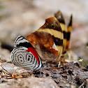 Butterfly 88