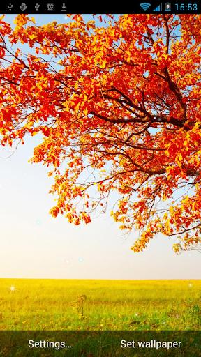 秋季動態壁紙