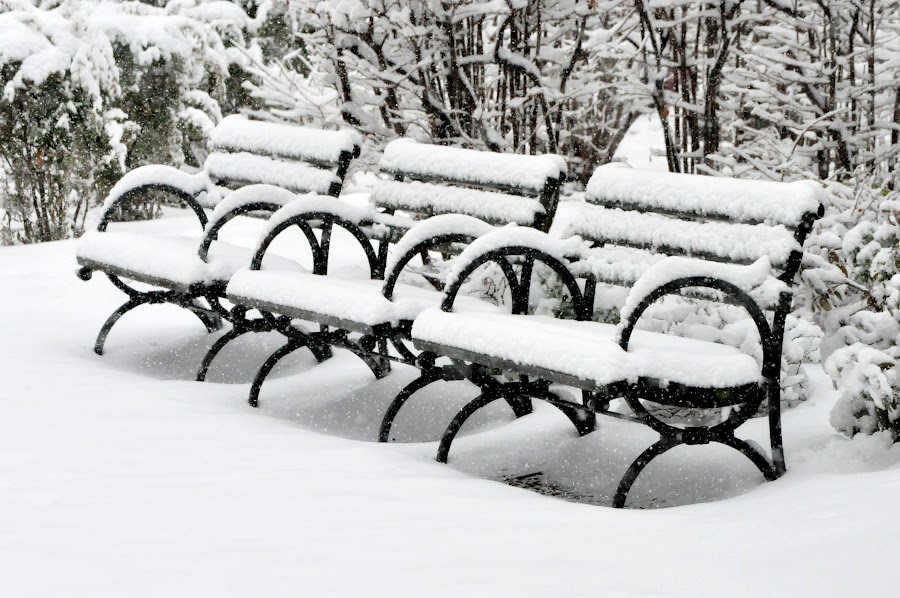 Snow Covered Benches by Diana Desrocher - City,  Street & Park  City Parks ( snowfall, benches, park, bench, street, snow, fall,  )