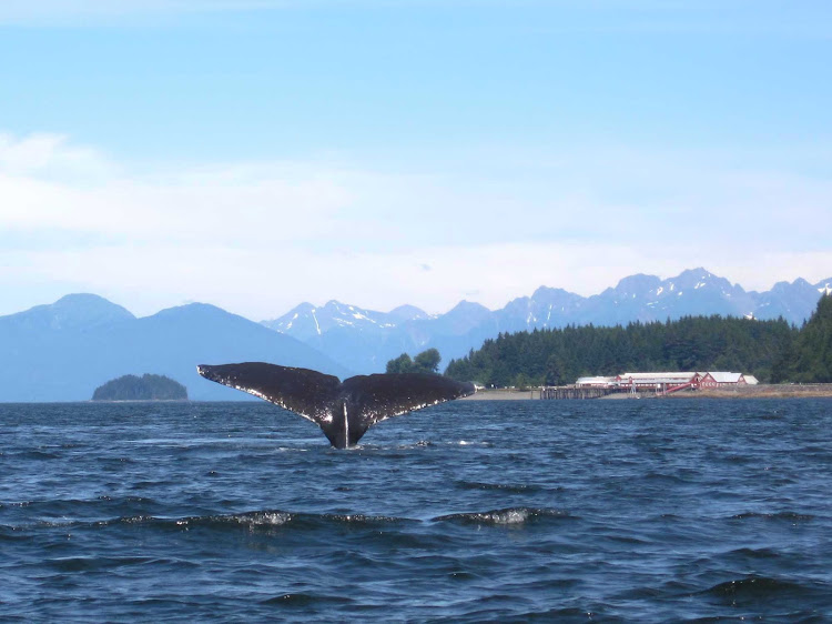 Whale watching near Icy Strait Point, Alaska.