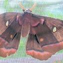 Polyphemus moth (giant silk moth)