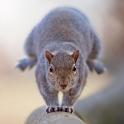 Squirrels Mania