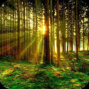 Twilight Forest 解謎 App LOGO-APP試玩