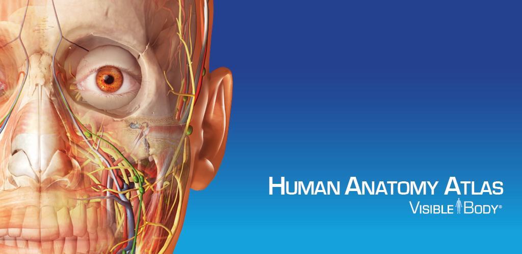 Human Anatomy Atlas Sp 0 Apk Download Comsiblebodylassp Apk Free