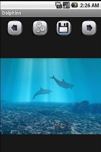 Dolphins - screenshot thumbnail
