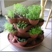 Indoor Gardening Advice Guide