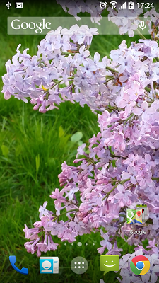 White Lilacs Live Wallpaper - screenshot