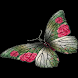 Big Butterfly Live Wallpape