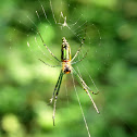 Decorative Leucage Spider