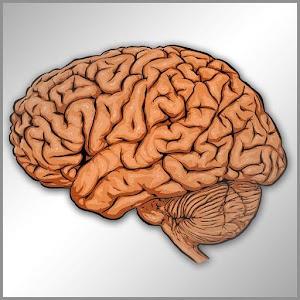 Neurologia en preguntas cortas 醫療 App LOGO-硬是要APP