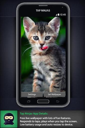 Kitten Ripple LWP