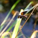 Dragonfly or Damselfly