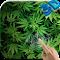 Marijuana Live Wallpaper HD