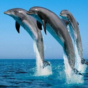 海豚壁紙 個人化 LOGO-玩APPs