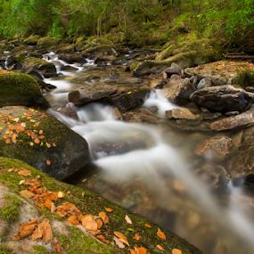 Irish stream by Benjamin Arthur - Nature Up Close Water ( stream, ireland, killarney, autumn, benjamin, benjiearthur, benjaminarthur.com, kerry, leaves, photography, arthur )