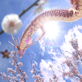 Sakura Dragon Sun