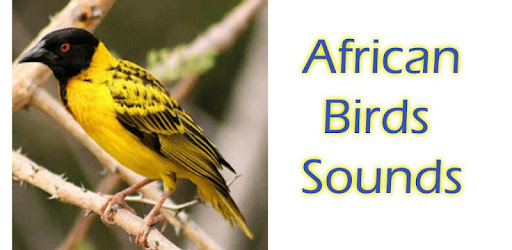 Bird sounds south africa online dating