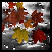 Rain PRO live wallpaper