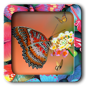 Butterfly Frames Editor Pro