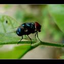 A Fly 2