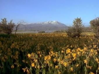 Zoom in on Wildflowers