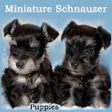 Miniature Schnauzer Puppies logo